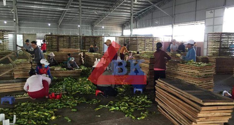 Lắp đặt kho lạnh trữ Bông Thanh Long ở Đồng Nai- Hợp tác xã Đại Nam 4